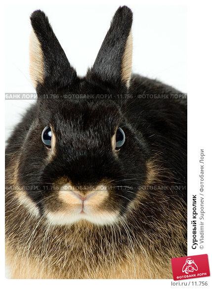 Суровый кролик, фото № 11756, снято 1 декабря 2005 г. (c) Vladimir Suponev / Фотобанк Лори