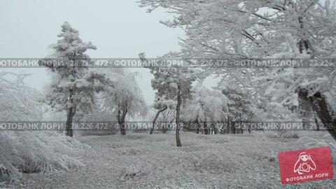 Купить «Surrealistic mountain glade. Windy weather, trees covered with hoarfrost.», видеоролик № 28226472, снято 24 марта 2018 г. (c) Андрей Радченко / Фотобанк Лори