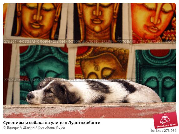 Сувениры и собака на улице в Луангпхабанге, фото № 273964, снято 6 декабря 2007 г. (c) Валерий Шанин / Фотобанк Лори