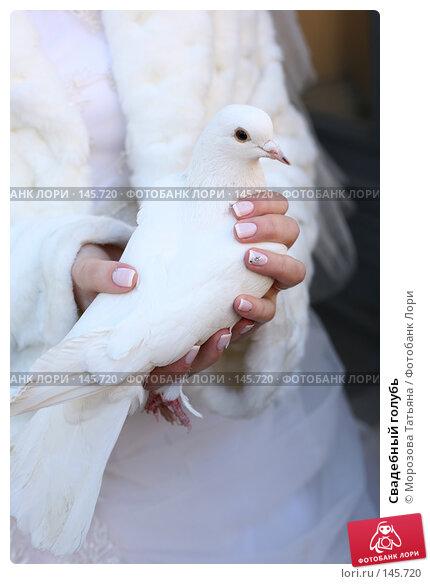 Свадебный голубь, фото № 145720, снято 24 марта 2007 г. (c) Морозова Татьяна / Фотобанк Лори