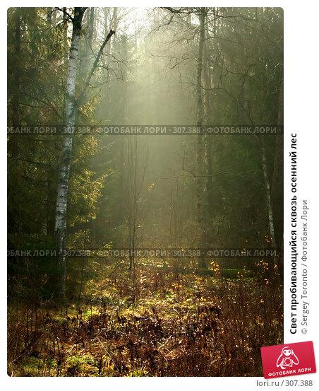 Свет пробивающийся сквозь осенний лес, фото № 307388, снято 27 октября 2007 г. (c) Sergey Toronto / Фотобанк Лори