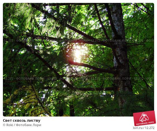 Свет сквозь листву, фото № 12272, снято 23 сентября 2006 г. (c) Roki / Фотобанк Лори