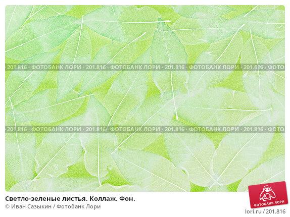 Купить «Светло-зеленые листья. Коллаж. Фон.», фото № 201816, снято 14 февраля 2008 г. (c) Иван Сазыкин / Фотобанк Лори
