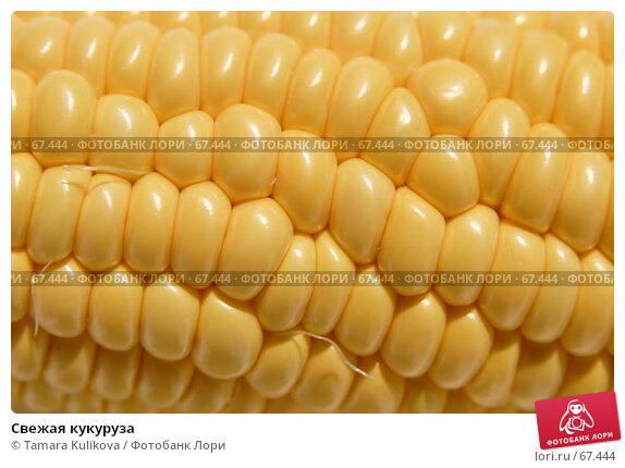 Свежая кукуруза, фото № 67444, снято 31 июля 2007 г. (c) Tamara Kulikova / Фотобанк Лори