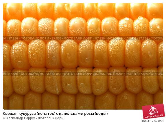 Свежая кукуруза (початок) с капельками росы (воды), фото № 87856, снято 18 сентября 2007 г. (c) Александр Паррус / Фотобанк Лори