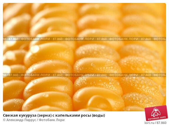 Купить «Свежая кукуруза (зерна) с капельками росы (воды)», фото № 87860, снято 18 сентября 2007 г. (c) Александр Паррус / Фотобанк Лори