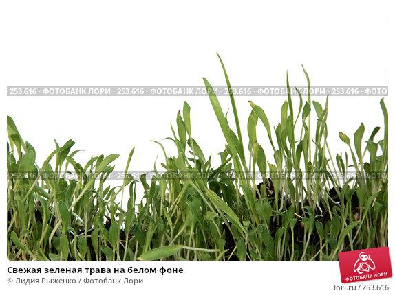 Свежая зеленая трава на белом фоне, фото № 253616, снято 28 марта 2008 г. (c) Лидия Рыженко / Фотобанк Лори
