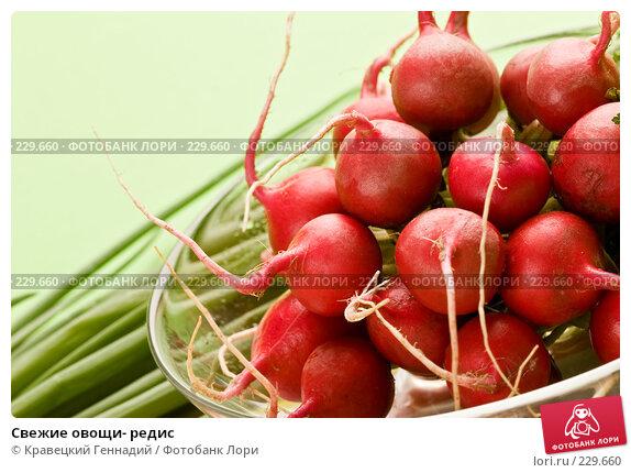 Свежие овощи- редис, фото № 229660, снято 17 июля 2005 г. (c) Кравецкий Геннадий / Фотобанк Лори