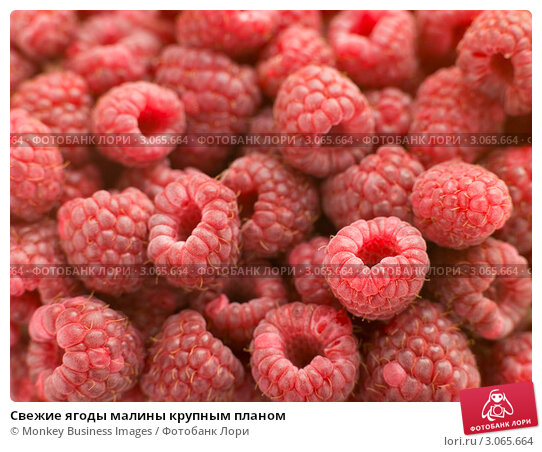 Купить «Свежие ягоды малины крупным планом», фото № 3065664, снято 2 ноября 2006 г. (c) Monkey Business Images / Фотобанк Лори