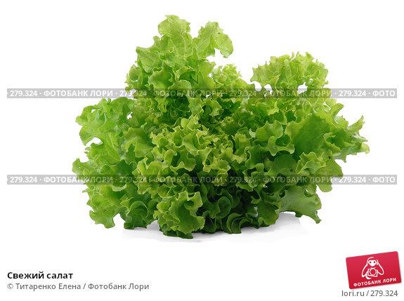 Свежий салат, фото № 279324, снято 16 апреля 2008 г. (c) Титаренко Елена / Фотобанк Лори