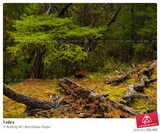Тайга, фото № 294408, снято 8 сентября 2007 г. (c) Andrey M / Фотобанк Лори