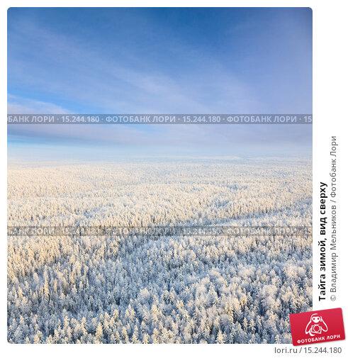Тайга зимой, вид сверху. Стоковое фото, фотограф Владимир Мельников / Фотобанк Лори