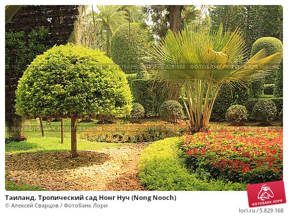 Таиланд. Тропический сад Нонг Нуч (Nong Nooch) Стоковое фото, фотограф Алексей Сварцов / Фотобанк Лори