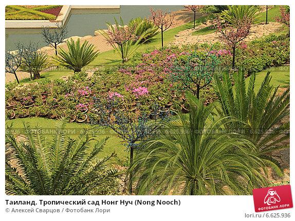 Купить «Таиланд. Тропический сад Нонг Нуч (Nong Nooch)», фото № 6625936, снято 22 февраля 2014 г. (c) Алексей Сварцов / Фотобанк Лори