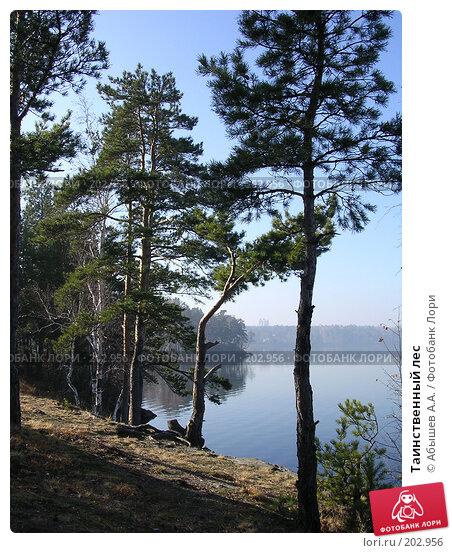 Таинственный лес, фото № 202956, снято 16 октября 2005 г. (c) Абышев А.А. / Фотобанк Лори