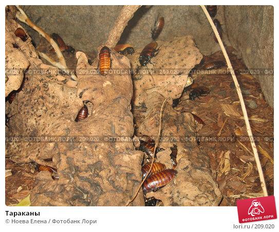 Тараканы, фото № 209020, снято 29 июня 2007 г. (c) Ноева Елена / Фотобанк Лори