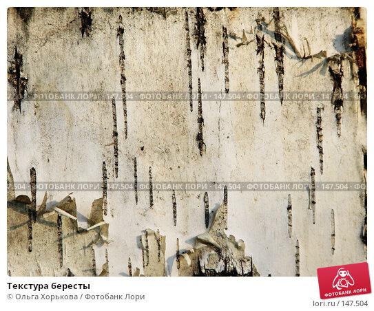 Текстура бересты, фото № 147504, снято 13 августа 2007 г. (c) Ольга Хорькова / Фотобанк Лори