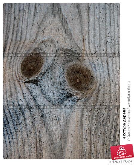 Текстура дерева, фото № 147496, снято 13 августа 2007 г. (c) Ольга Хорькова / Фотобанк Лори