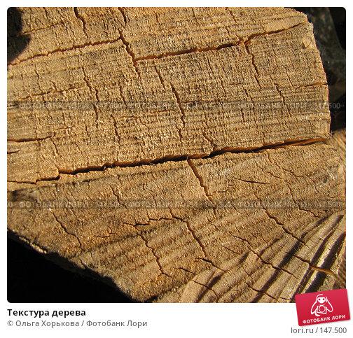 Текстура дерева, фото № 147500, снято 13 августа 2007 г. (c) Ольга Хорькова / Фотобанк Лори