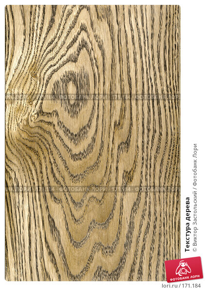 Текстура дерева, фото № 171184, снято 26 июня 2017 г. (c) Виктор Застольский / Фотобанк Лори