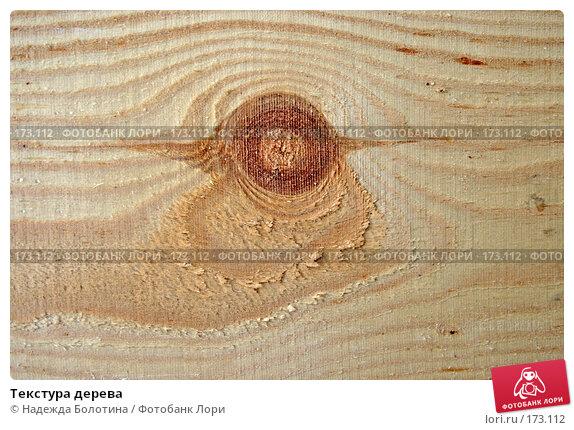 Купить «Текстура дерева», фото № 173112, снято 8 апреля 2007 г. (c) Надежда Болотина / Фотобанк Лори