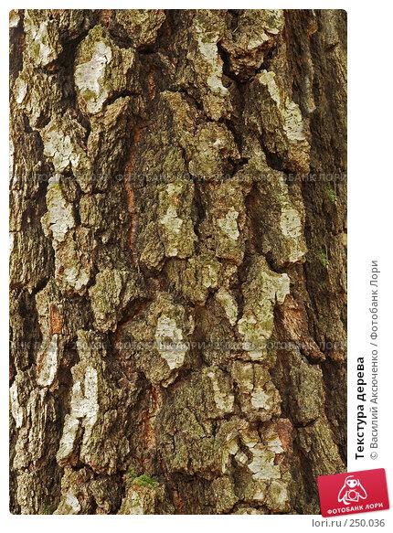 Текстура дерева, фото № 250036, снято 12 апреля 2008 г. (c) Василий Аксюченко / Фотобанк Лори