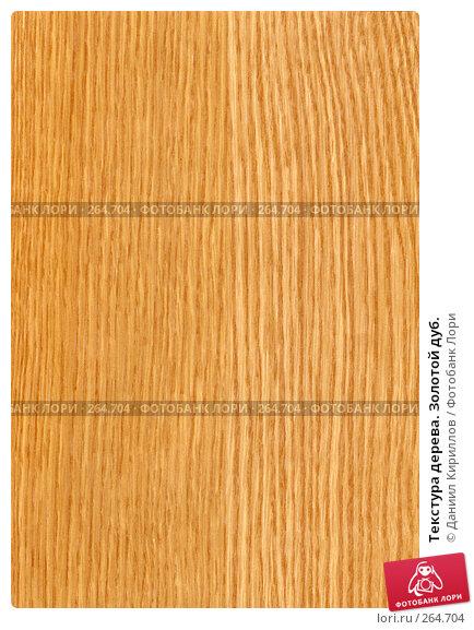 Текстура дерева. Золотой дуб., фото № 264704, снято 16 января 2017 г. (c) Даниил Кириллов / Фотобанк Лори