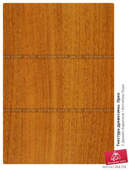 Текстура древесины. Орех, фото № 264732, снято 30 мая 2017 г. (c) Даниил Кириллов / Фотобанк Лори