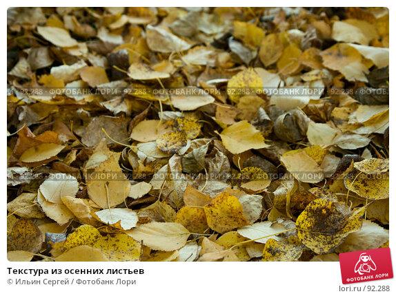 Купить «Текстура из осенних листьев», фото № 92288, снято 2 октября 2007 г. (c) Ильин Сергей / Фотобанк Лори