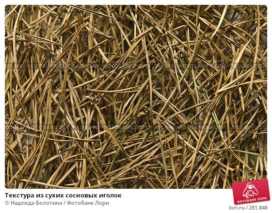 Текстура из сухих сосновых иголок, фото № 281848, снято 5 апреля 2008 г. (c) Надежда Болотина / Фотобанк Лори