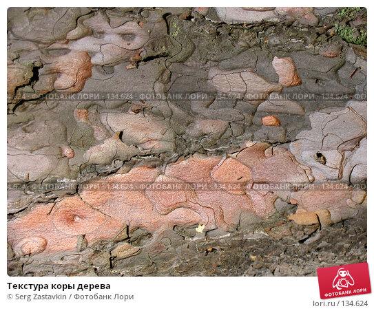 Текстура коры дерева, фото № 134624, снято 2 октября 2005 г. (c) Serg Zastavkin / Фотобанк Лори