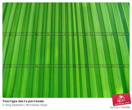 Текстура листа растения, фото № 134644, снято 25 марта 2005 г. (c) Serg Zastavkin / Фотобанк Лори