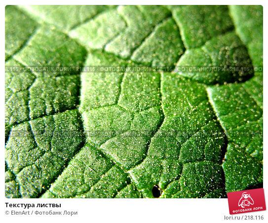 Купить «Текстура листвы», фото № 218116, снято 26 апреля 2018 г. (c) ElenArt / Фотобанк Лори