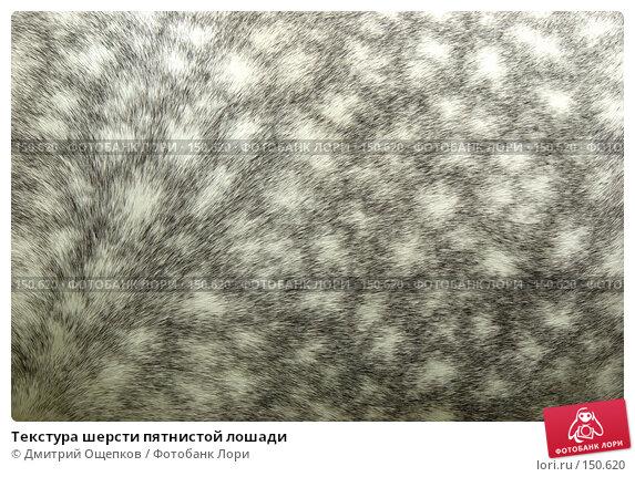 Текстура шерсти пятнистой лошади, фото № 150620, снято 11 июня 2007 г. (c) Дмитрий Ощепков / Фотобанк Лори