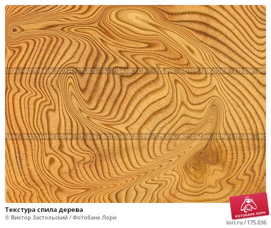 Текстура спила дерева, фото № 175036, снято 22 июня 2017 г. (c) Виктор Застольский / Фотобанк Лори