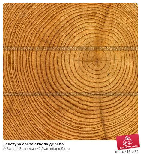 Текстура среза ствола дерева, фото № 151452, снято 27 мая 2017 г. (c) Виктор Застольский / Фотобанк Лори