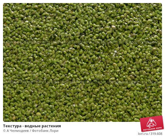 Текстура - водные растения, фото № 319608, снято 30 июля 2006 г. (c) A Челмодеев / Фотобанк Лори