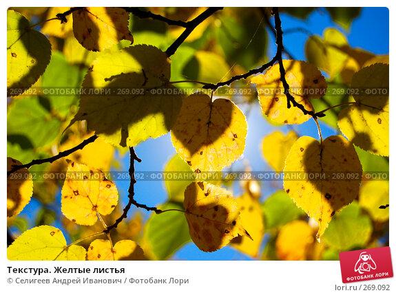 Текстура. Желтые листья, фото № 269092, снято 6 сентября 2006 г. (c) Селигеев Андрей Иванович / Фотобанк Лори