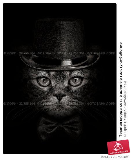 Купить «Темная морда кота в шляпе и галстуке-бабочке», фото № 22755304, снято 3 февраля 2016 г. (c) Юрий Плющев / Фотобанк Лори