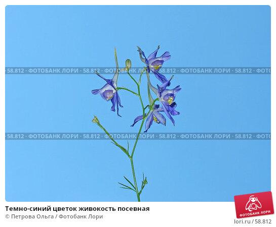 Купить «Темно-синий цветок живокость посевная», фото № 58812, снято 1 июля 2007 г. (c) Петрова Ольга / Фотобанк Лори