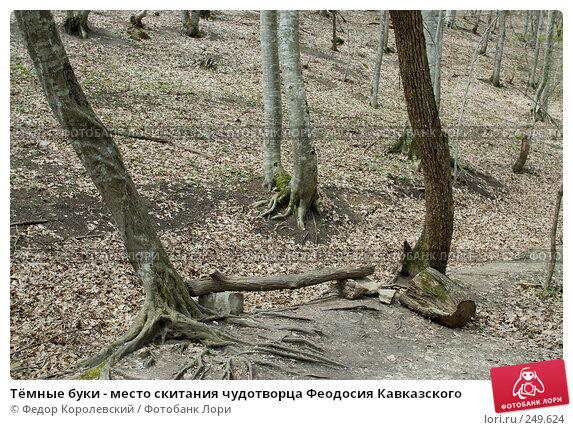 Тёмные буки - место скитания чудотворца Феодосия Кавказского, фото № 249624, снято 12 апреля 2008 г. (c) Федор Королевский / Фотобанк Лори