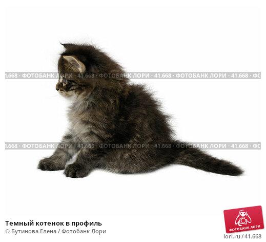 Темный котенок в профиль, фото № 41668, снято 6 мая 2007 г. (c) Бутинова Елена / Фотобанк Лори