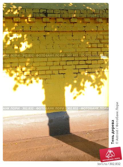 Тень дерева, фото № 302832, снято 28 мая 2008 г. (c) Astroid / Фотобанк Лори