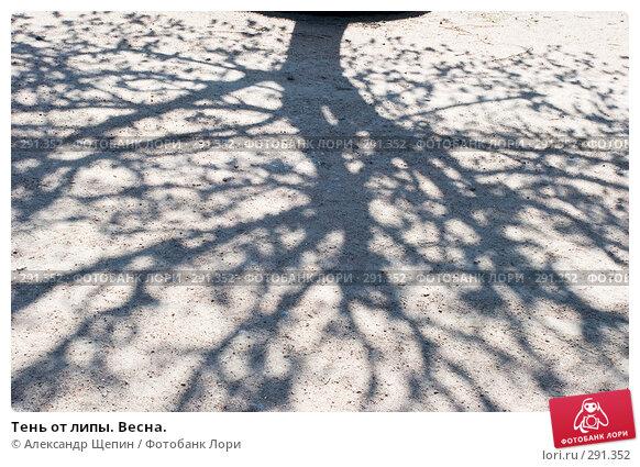 Тень от липы. Весна., эксклюзивное фото № 291352, снято 16 мая 2008 г. (c) Александр Щепин / Фотобанк Лори