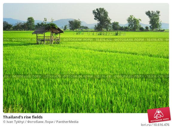Thailand's rise fields. Стоковое фото, фотограф Ivan Tykhyi / PantherMedia / Фотобанк Лори