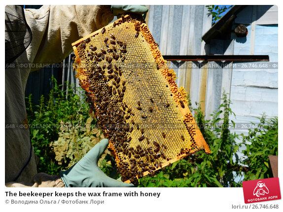 Купить «The beekeeper keeps the wax frame with honey», фото № 26746648, снято 7 августа 2017 г. (c) Володина Ольга / Фотобанк Лори