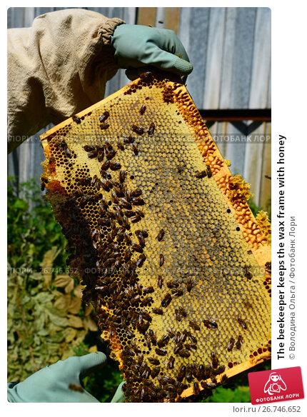 Купить «The beekeeper keeps the wax frame with honey», фото № 26746652, снято 7 августа 2017 г. (c) Володина Ольга / Фотобанк Лори