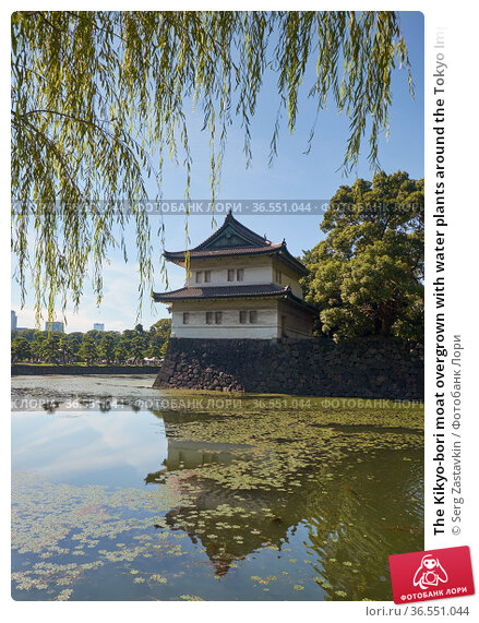The Kikyo-bori moat overgrown with water plants around the Tokyo Imperial Palace. Tokyo. Japan (2019 год). Стоковое фото, фотограф Serg Zastavkin / Фотобанк Лори