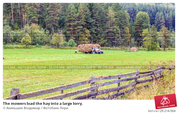 Купить «The mowers load the hay into a large lorry.», фото № 29214564, снято 7 сентября 2017 г. (c) Акиньшин Владимир / Фотобанк Лори