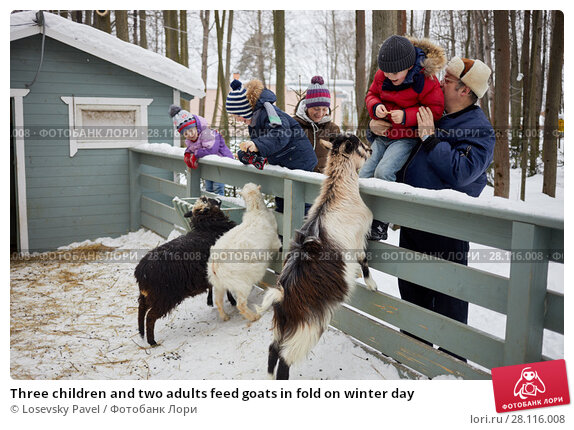 Купить «Three children and two adults feed goats in fold on winter day», фото № 28116008, снято 4 февраля 2017 г. (c) Losevsky Pavel / Фотобанк Лори